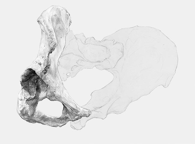 Bones by Chamo San